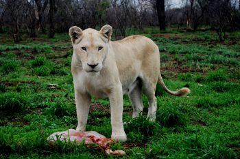 Marakele Predator Park